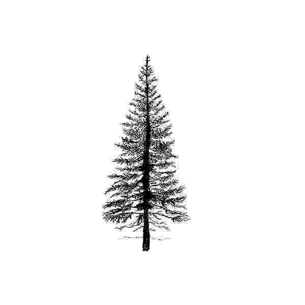 pine tree sketch 32a2 squirkle a realistic spruce tree drawspace pine sketch tree