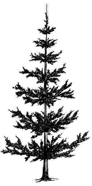 pine tree sketch 5 pine tree silhouette drawing png transparent onlygfxcom tree sketch pine