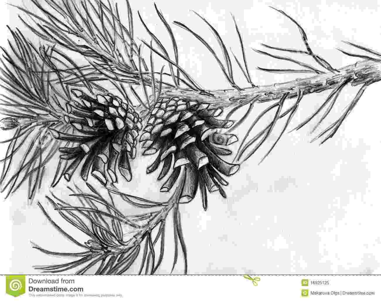 pine tree sketch pin by rhea adkins on wedding tree drawings pencil tree pine sketch tree