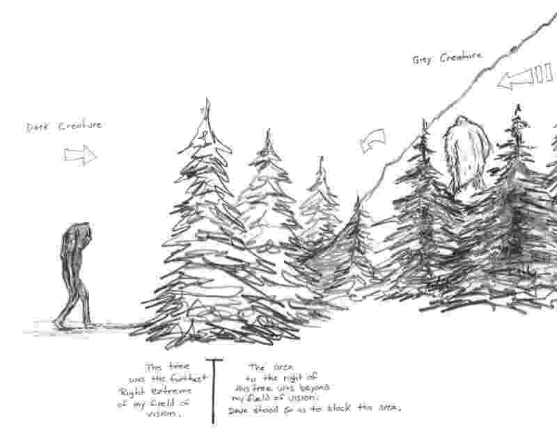 pine tree sketch pine tree clipart etc pine tree sketch