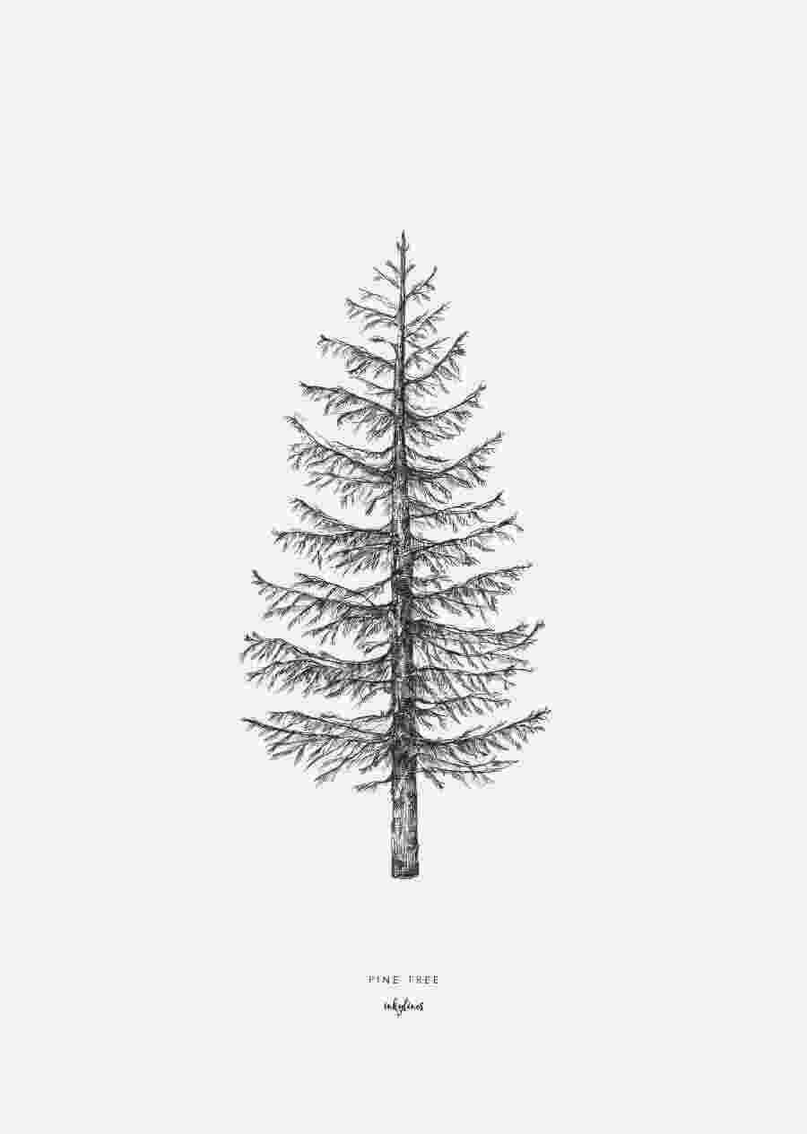pine tree sketch pine tree sketch at paintingvalleycom explore pine sketch tree