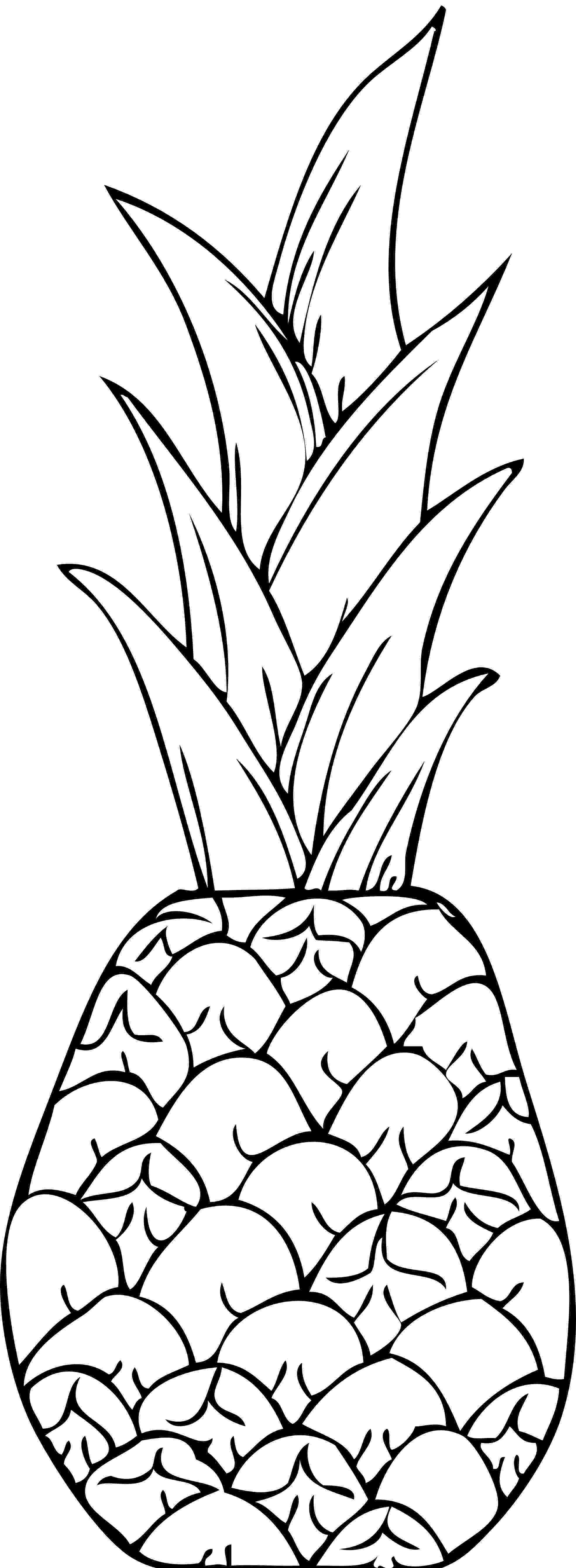 pineapple colouring picture pineapple coloring pages 360coloringpages colouring pineapple picture