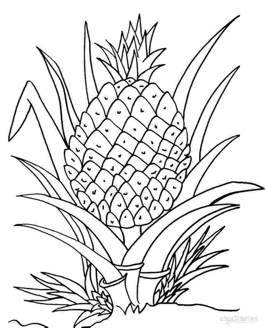 pineapple picture to color pineapple coloring pages to picture color pineapple