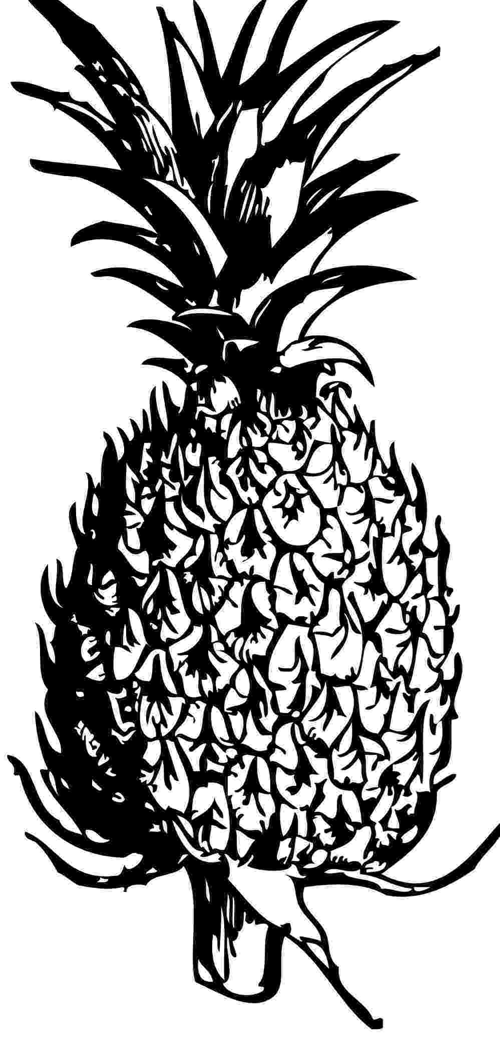 pineapple picture to color printable pineapple coloring pages for kids cool2bkids color to picture pineapple