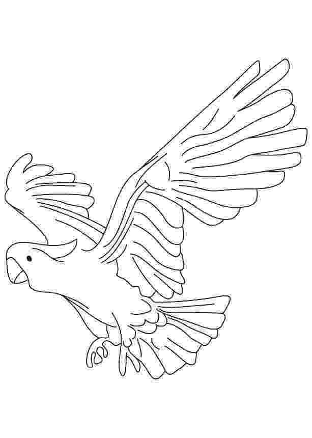 pirate parrot coloring pages pirate parrot coloring pages at getcoloringscom free coloring pages parrot pirate
