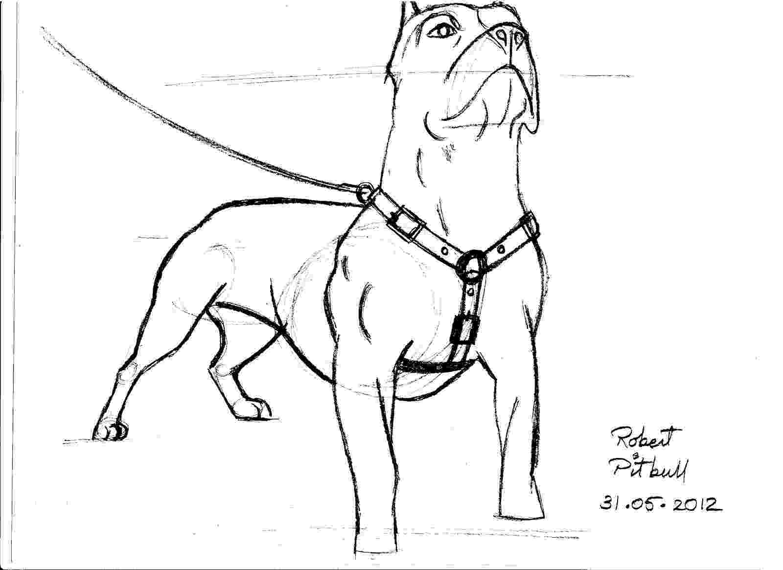 pitbull coloring pages art guy pages pitbull coloring