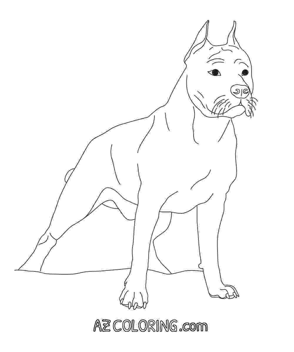 pitbull coloring pages coloring pages of pitbulls coloring home pages pitbull coloring