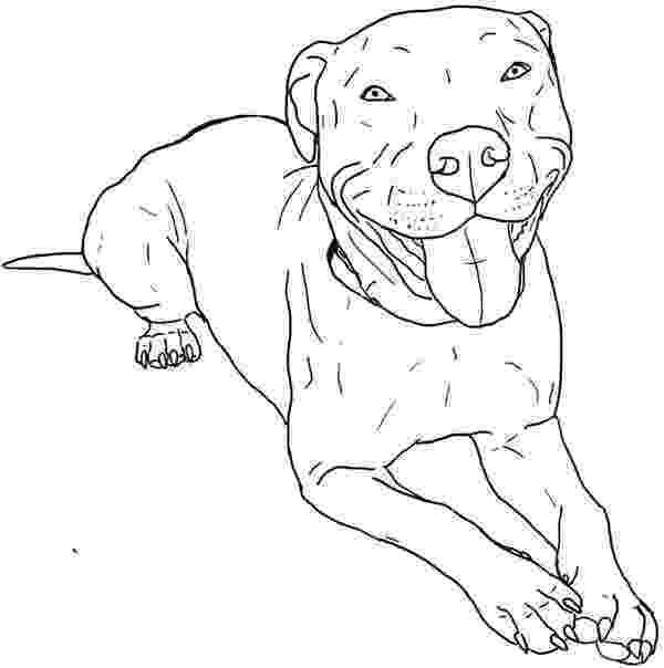 pitbull coloring pages pitbull coloring page coloring sky coloring pitbull pages