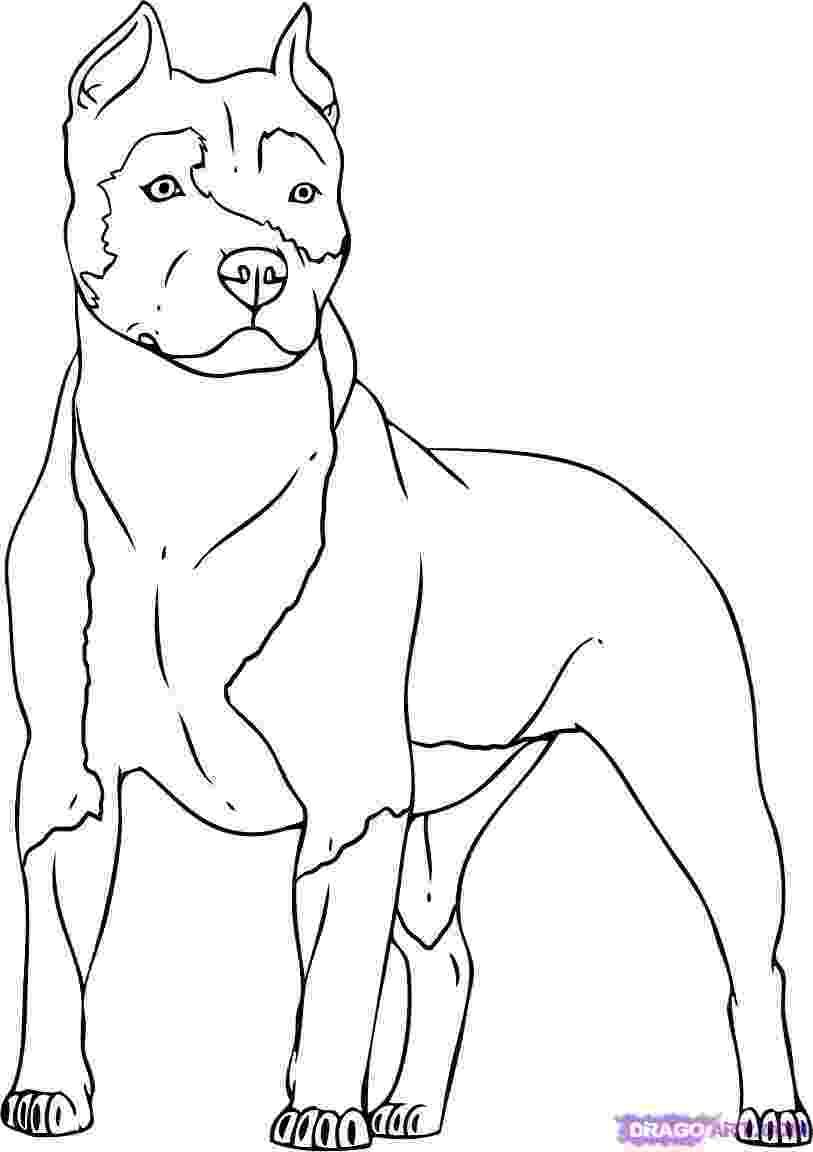 pitbull coloring pages pitbull coloring pagedog coloring pages coloring pages pitbull