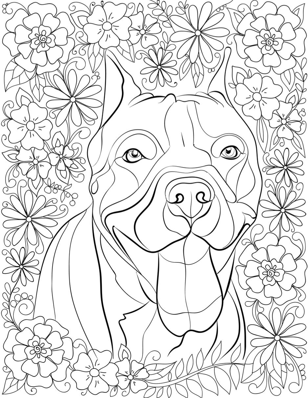 pitbull coloring pages pitbull coloring pages printable coloring home pages coloring pitbull