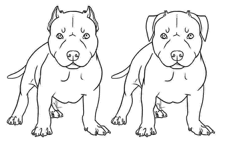 pitbull coloring pages pitbull coloring pages to download and print for free pitbull pages coloring