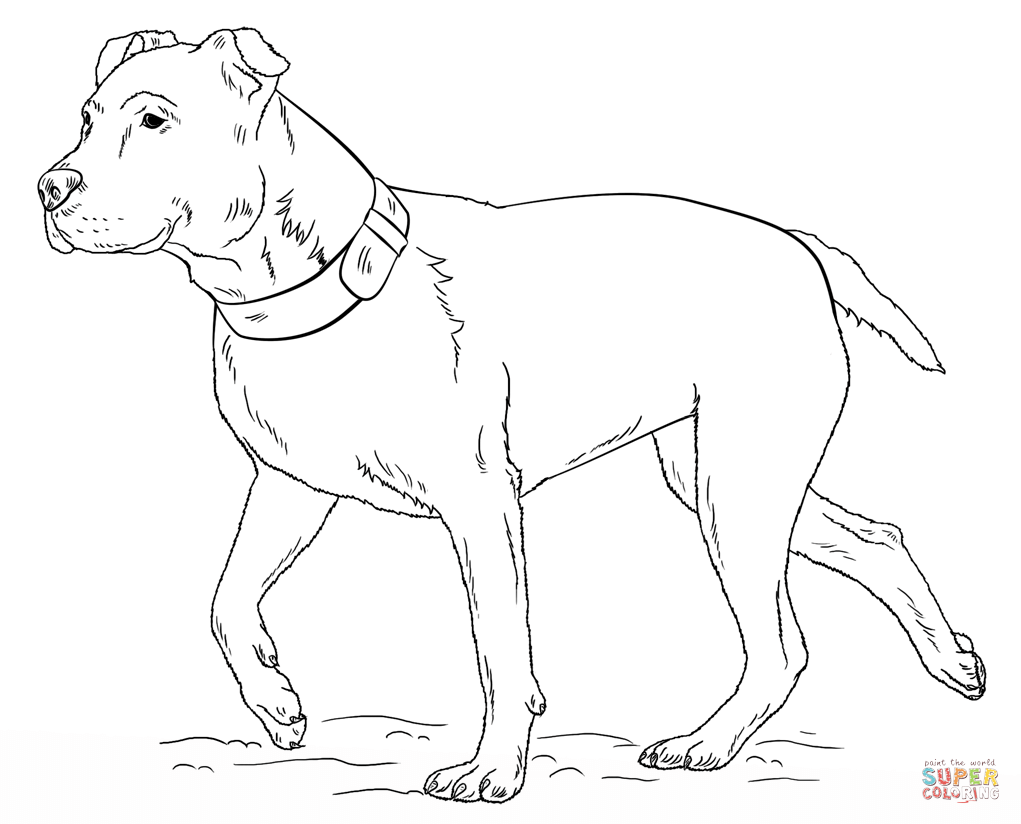 pitbull coloring pages pitbull coloring pages to download and print for free pitbull pages coloring 1 1