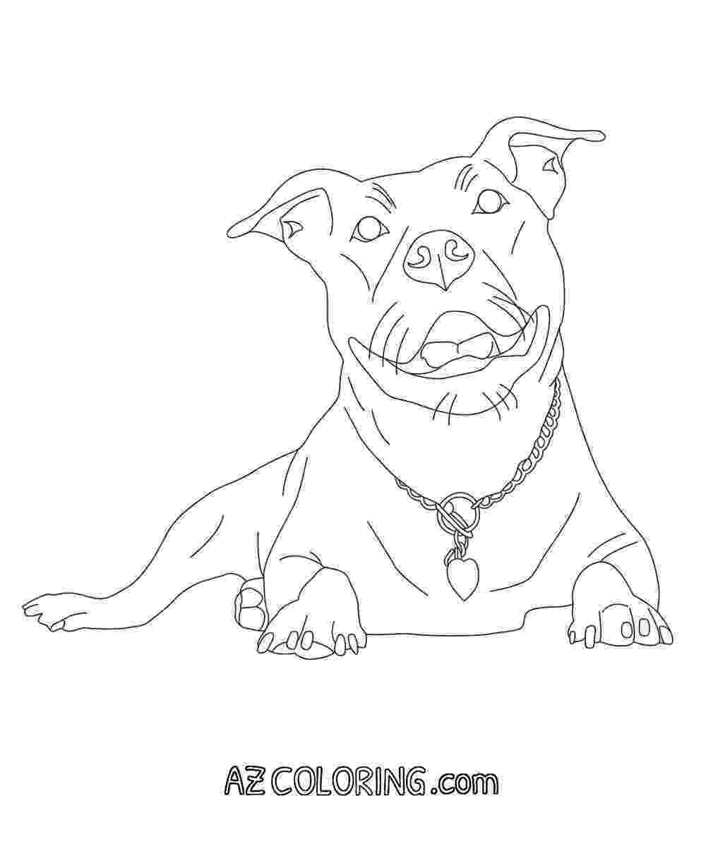 pitbull coloring pages pitbull dog coloring pages at getcoloringscom free pages pitbull coloring
