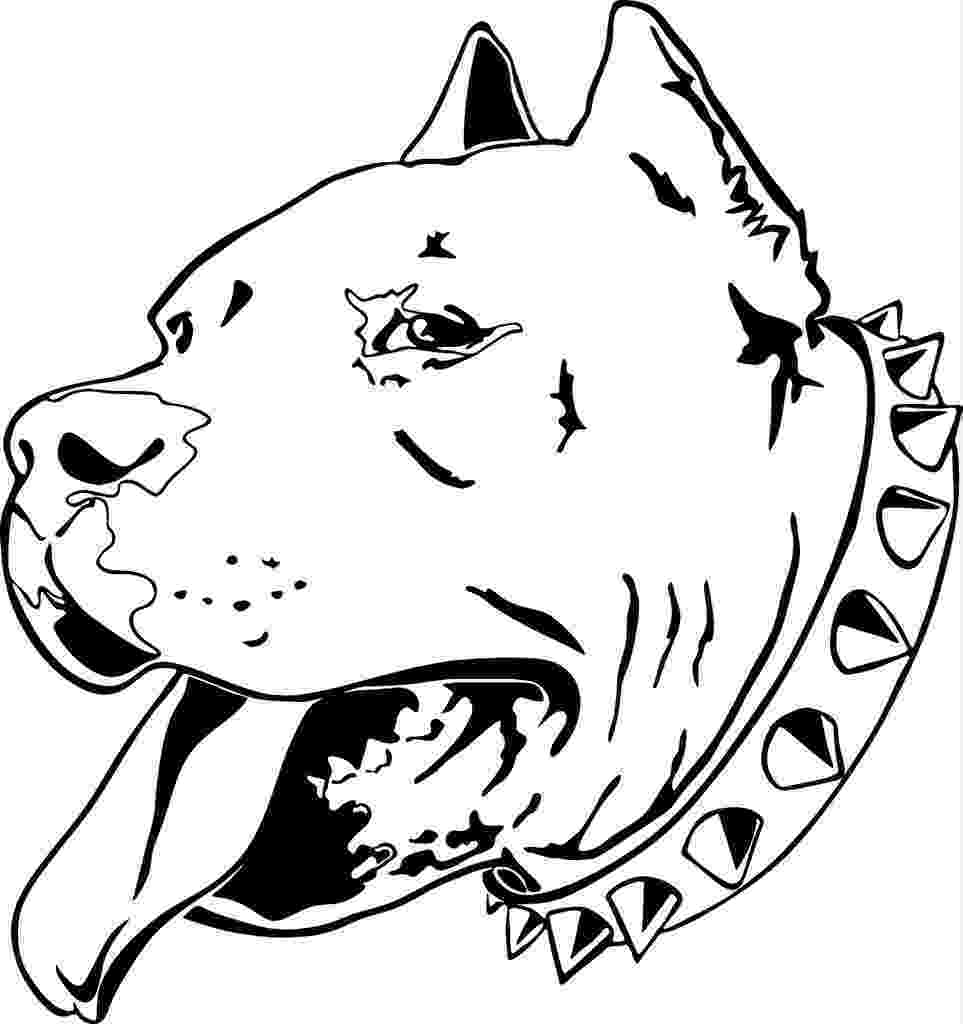 pitbull coloring pages the best free pitbull drawing images download from 706 pages coloring pitbull
