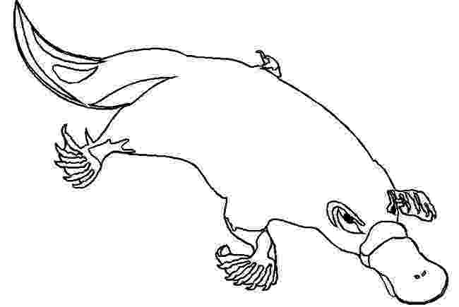 platypus coloring page platypus coloring pages to download and print for free platypus page coloring