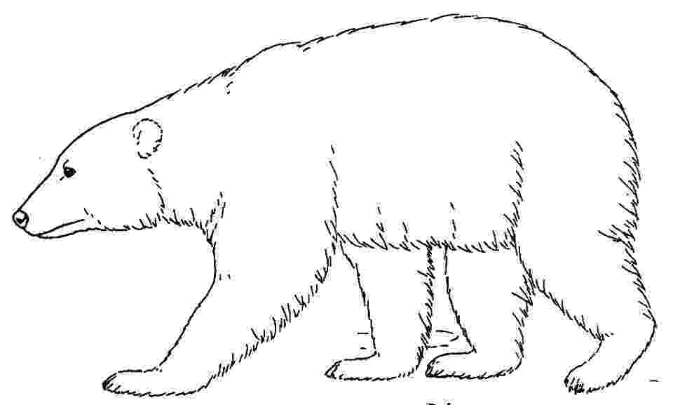 polar bear to color coloring page polar bear free printable downloads from bear to polar color