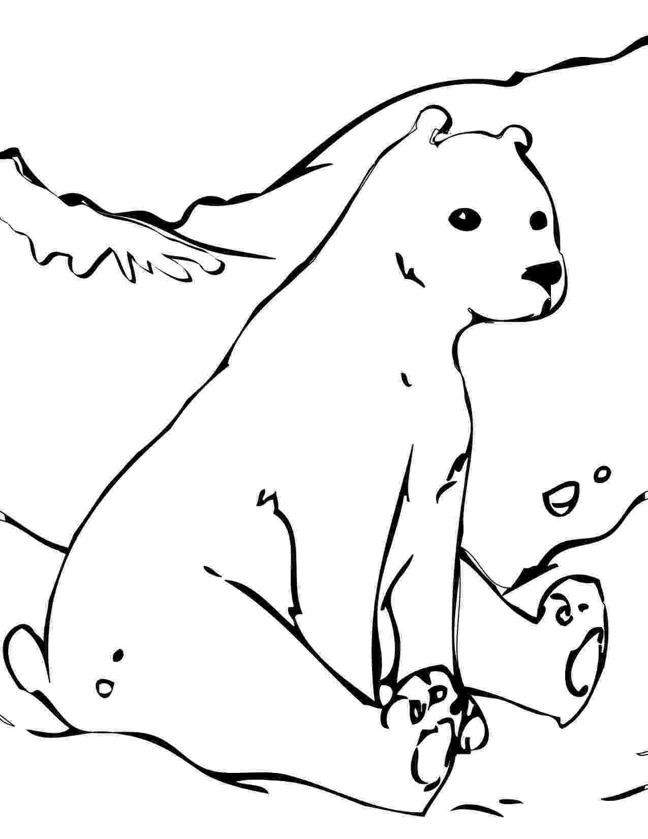 polar bear to color free printable polar bear coloring pages for kids to color bear polar