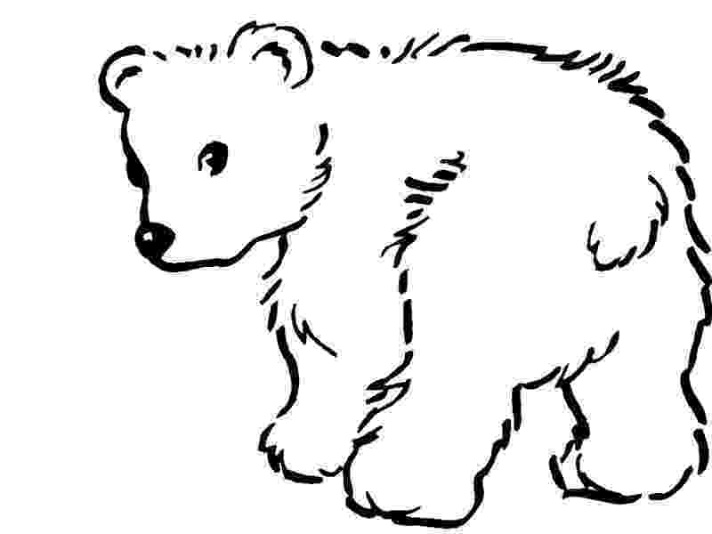polar bear to color polar bear coloring pages to download and print for free color bear to polar