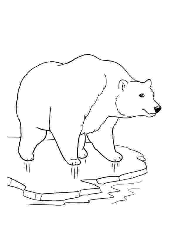 polar bear to color polar bear coloring pages to download and print for free to bear color polar