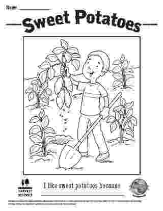 potato pictures for colouring potato coloring pages download and print potato coloring for pictures colouring potato