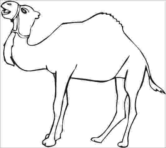 printable camel camel coloring sheet education for free printable camel