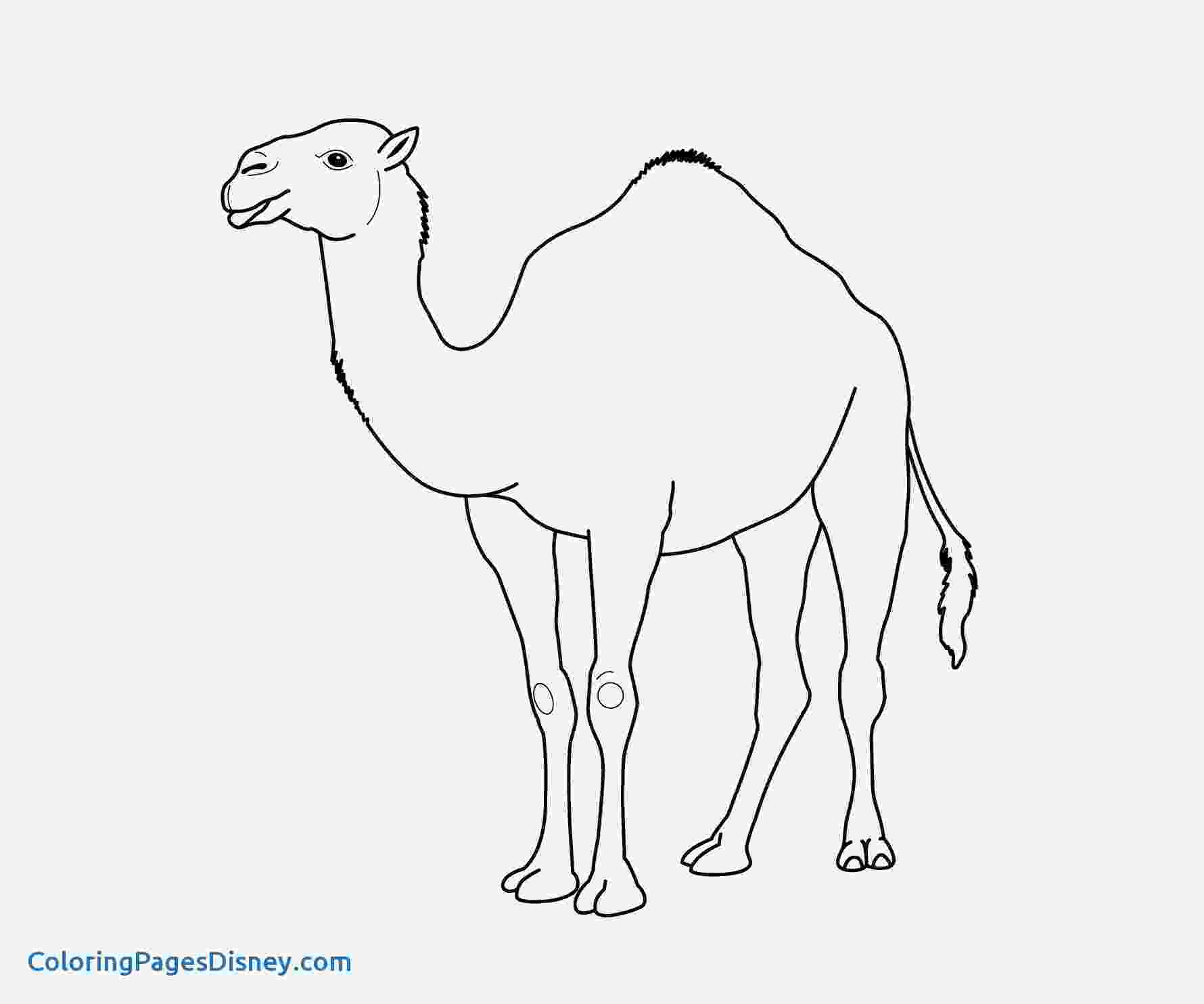printable camel camel pictures to print free download on clipartmag camel printable