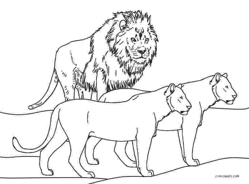 printable coloring pages lion african lion coloring page free printable coloring pages pages lion printable coloring