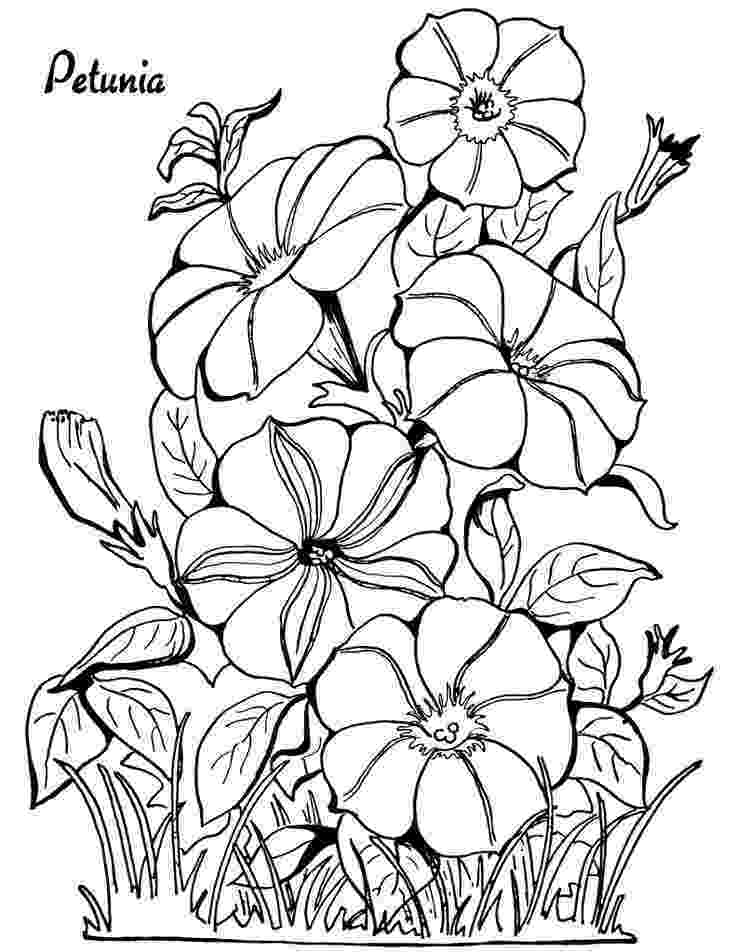 printable flower coloring pages for adults 10 floral adult coloring pages the graphics fairy flower pages coloring printable for adults
