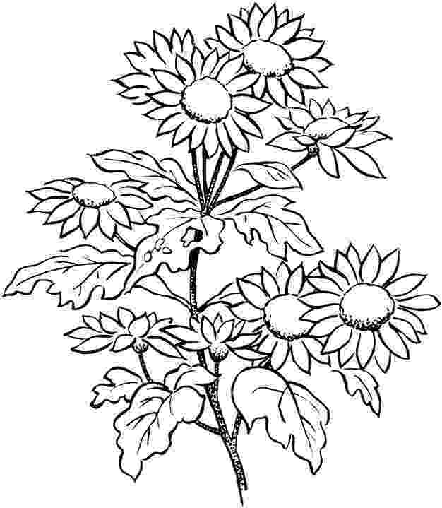 printable flower coloring pages for adults flower coloring pages for adults best coloring pages for flower for coloring printable pages adults