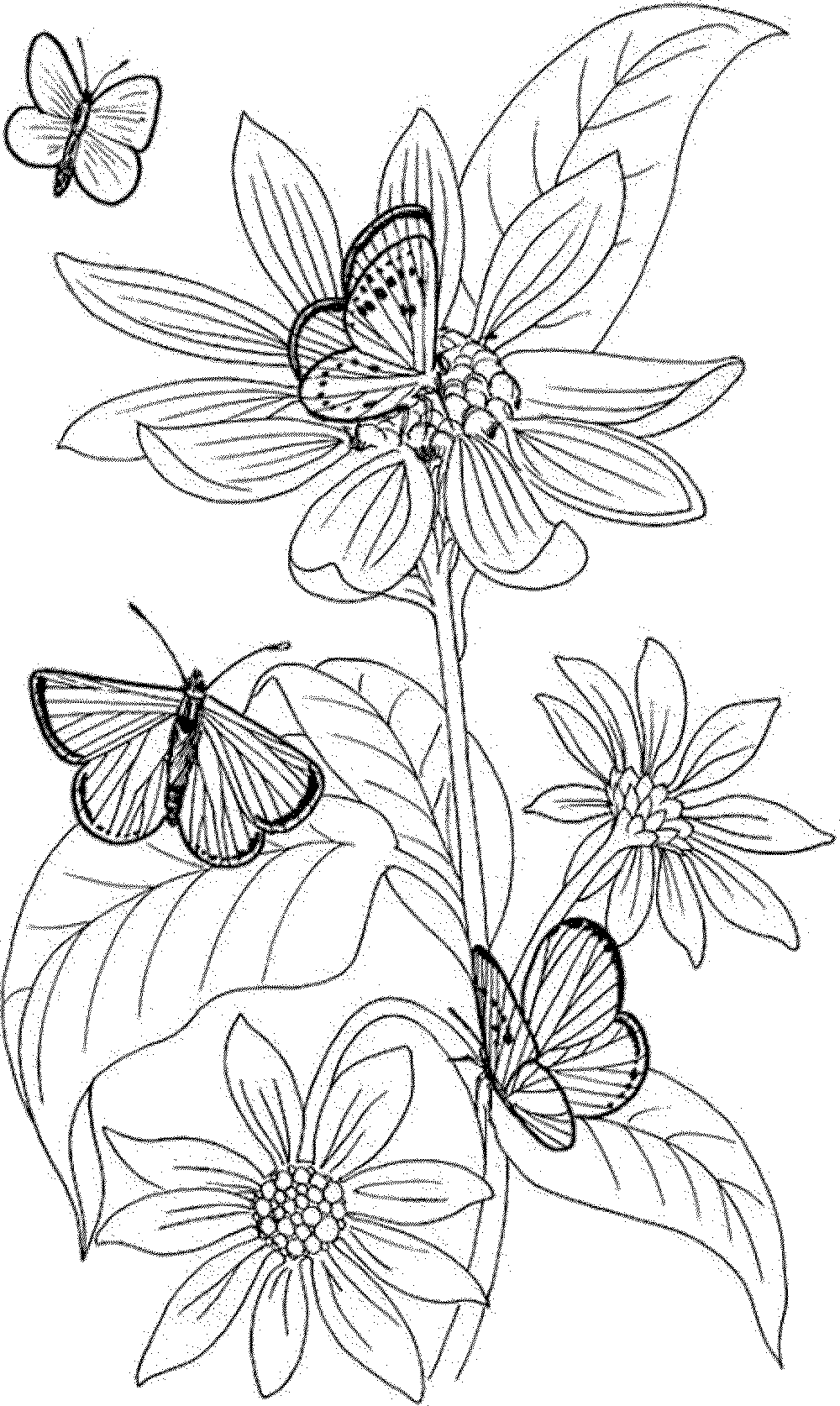 printable flower coloring pages for adults printable coloring pages for adults flowers coloring home for adults coloring printable pages flower