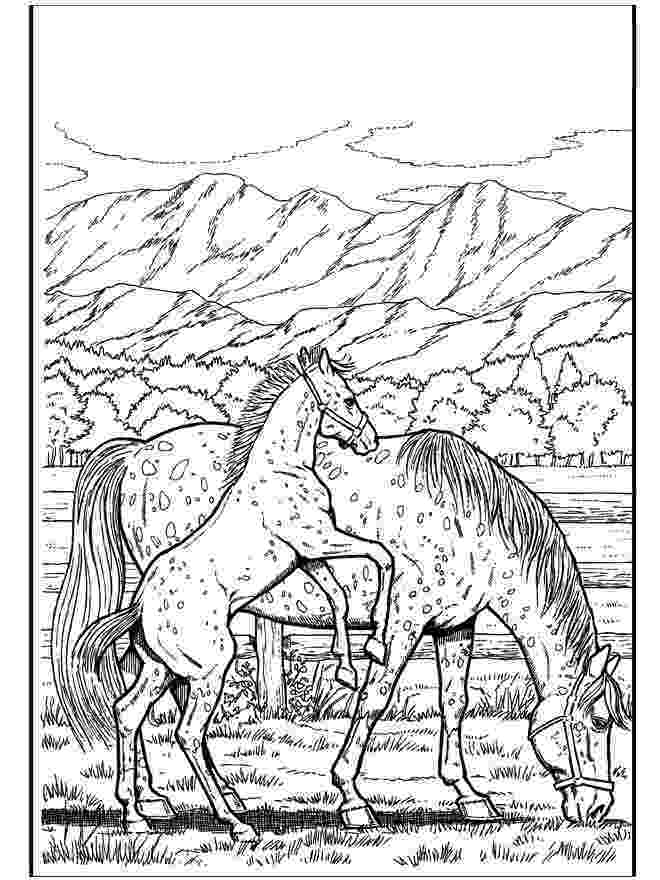 printable horse coloring pages for adults intricate coloring pages for adults announcing vidonya horse printable coloring for pages adults