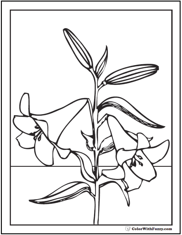 printable pictures of lilies 12 lily coloring pages fun interactive notebook pdf printables printable pictures of lilies