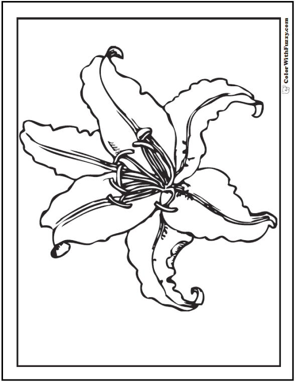 printable pictures of lilies coloring pages lily 21 natural world gt flowers free of lilies printable pictures