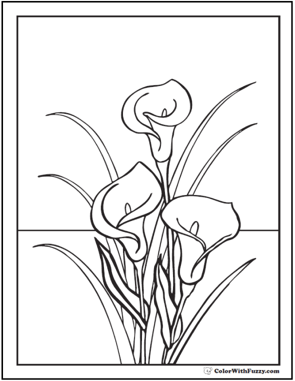 printable pictures of lilies lily coloring pages coloring pages to download and print printable lilies of pictures