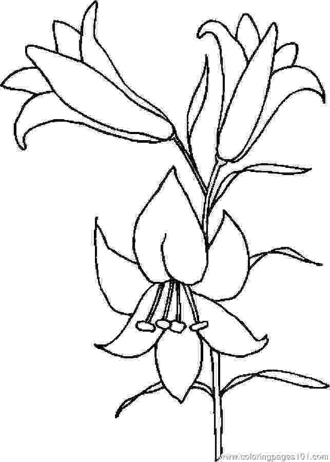 printable pictures of lilies lily coloring pages customize 12 pdf printables of pictures lilies printable