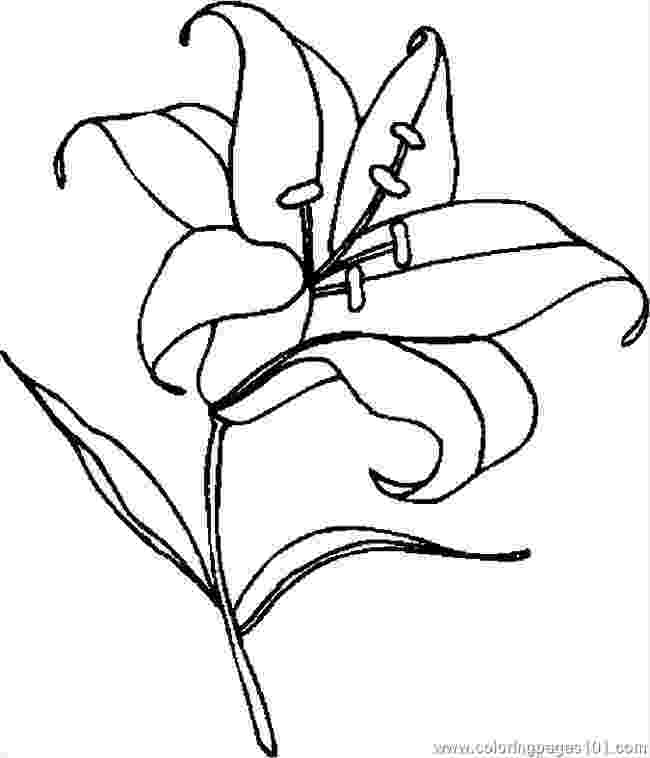 printable pictures of lilies lily coloring pages customize 12 pdf printables pictures lilies of printable