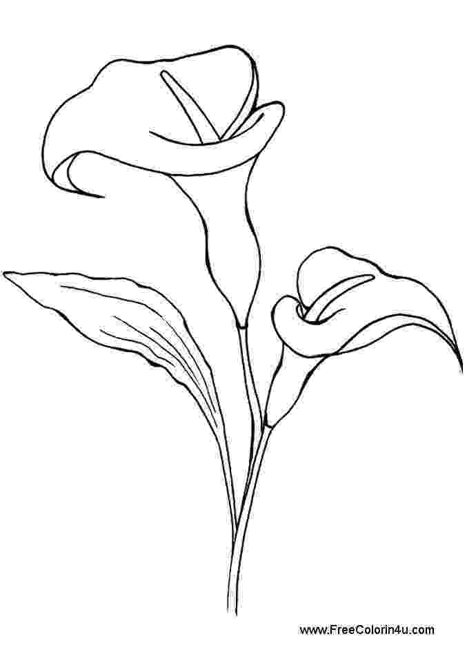 printable pictures of lilies lily coloring pages customize 12 pdf printables pictures lilies printable of