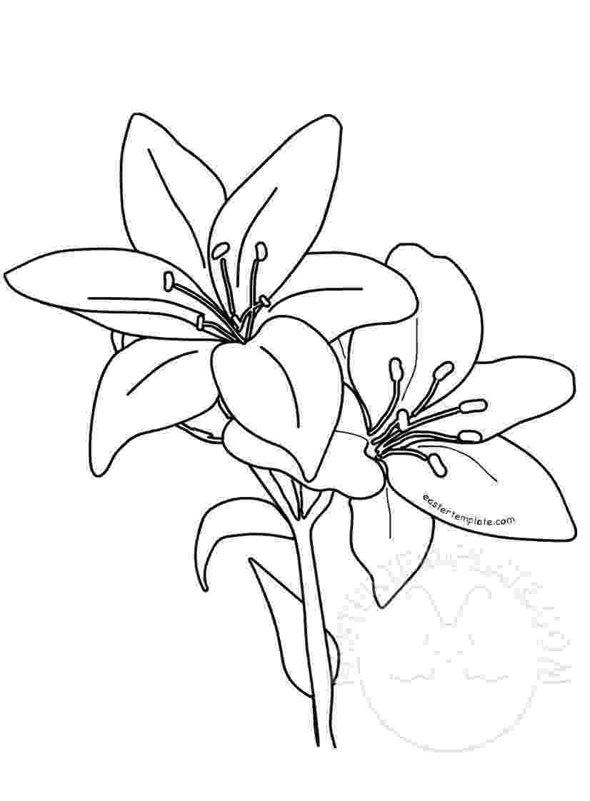 printable pictures of lilies printable easter lilies template easter template printable of pictures lilies