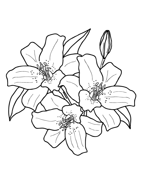 printable pictures of lilies stargazer lily coloring page at getcoloringscom free printable pictures lilies of