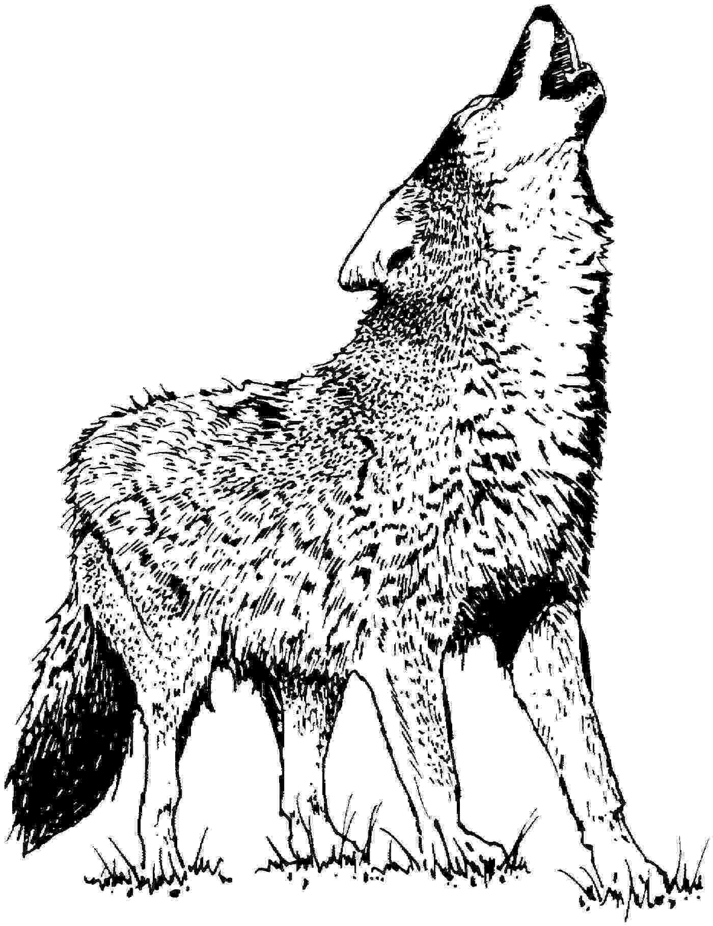 printable pictures of wolves wolf to print for free wolf kids coloring pages pictures of wolves printable
