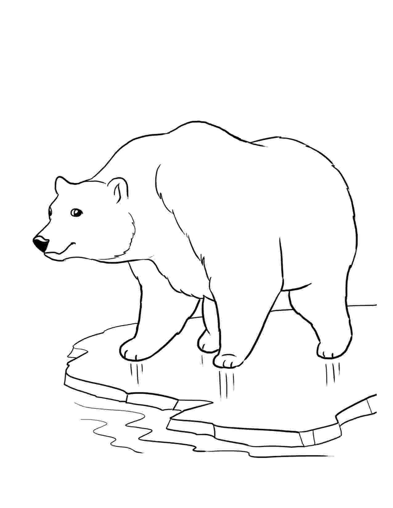 printable polar bear free printable bear coloring pages for kids bear printable polar
