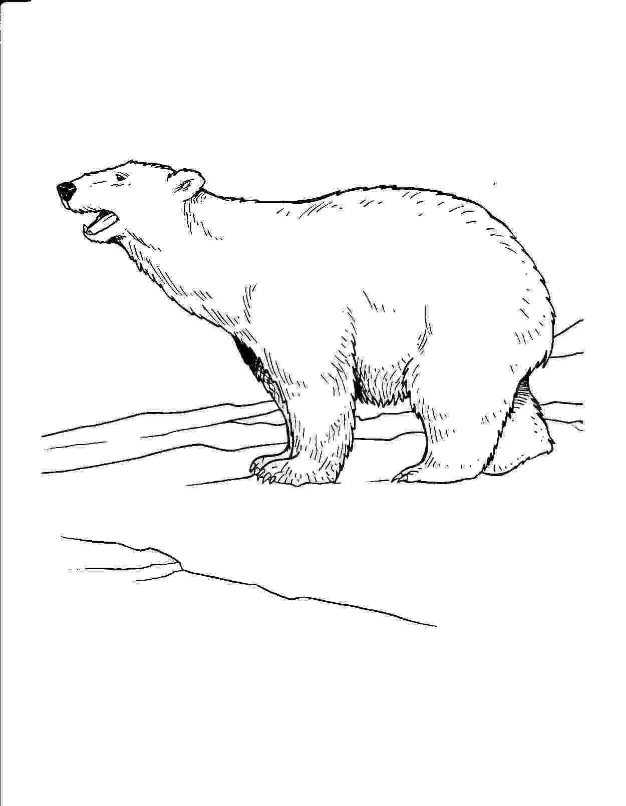 printable polar bear free printable polar bear coloring pages for kids printable bear polar