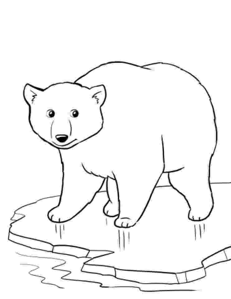 printable polar bear free printable polar bear coloring pages for kids printable polar bear