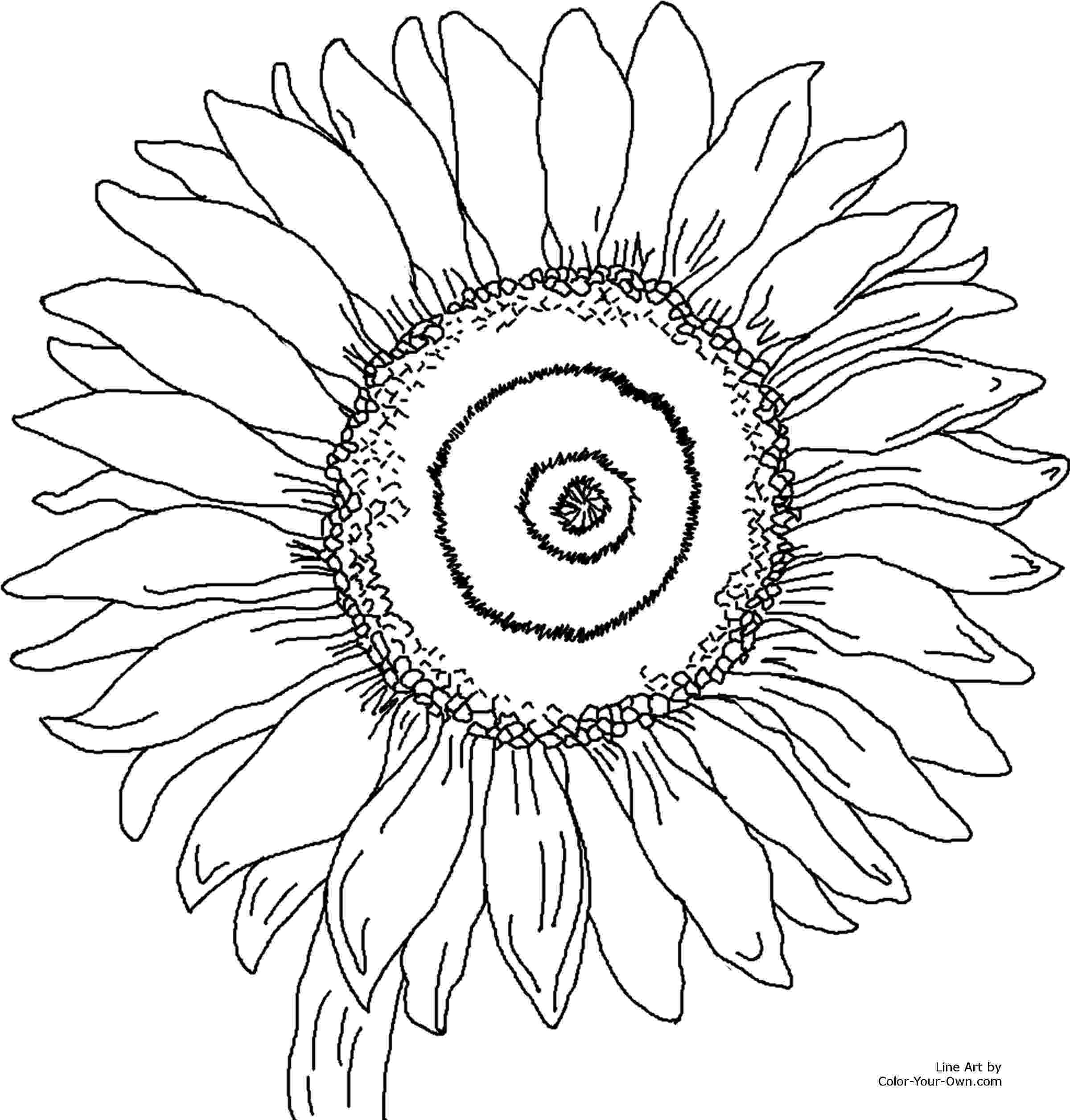 printable summer coloring pages for adults summer coloring pages all collectable by me best season coloring pages summer printable for adults