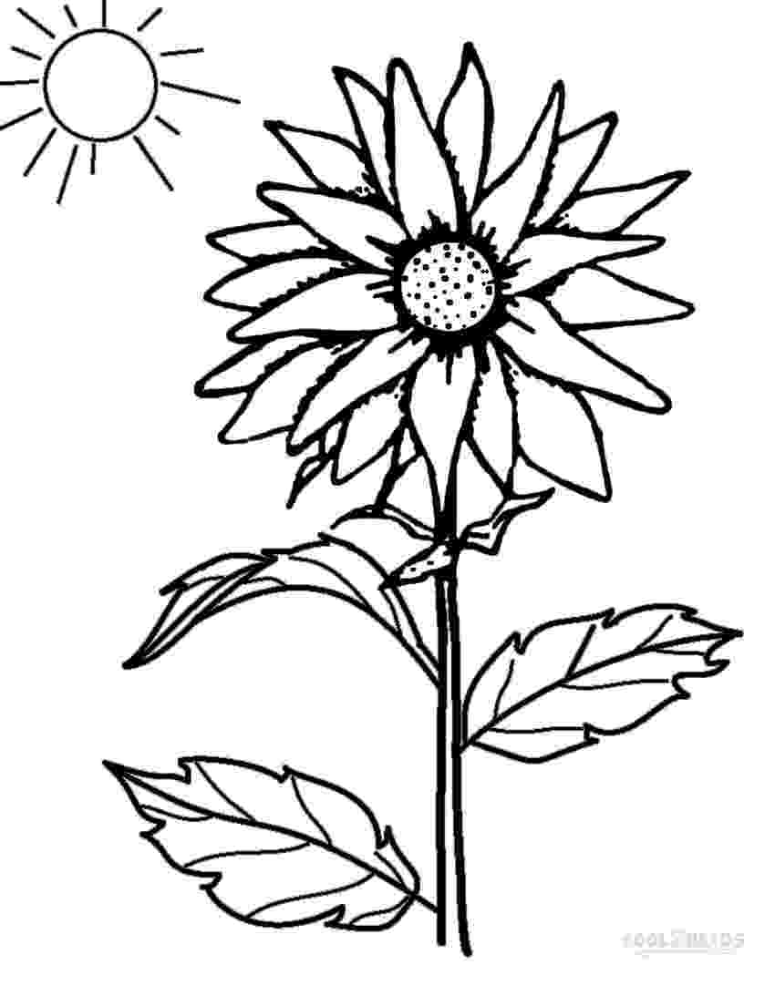 printable sunflower pictures to color flowers letmecolor color to sunflower printable pictures
