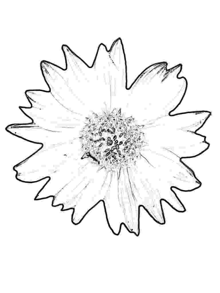printable sunflower pictures to color free sunflower color sheets download free clip art free sunflower printable to color pictures