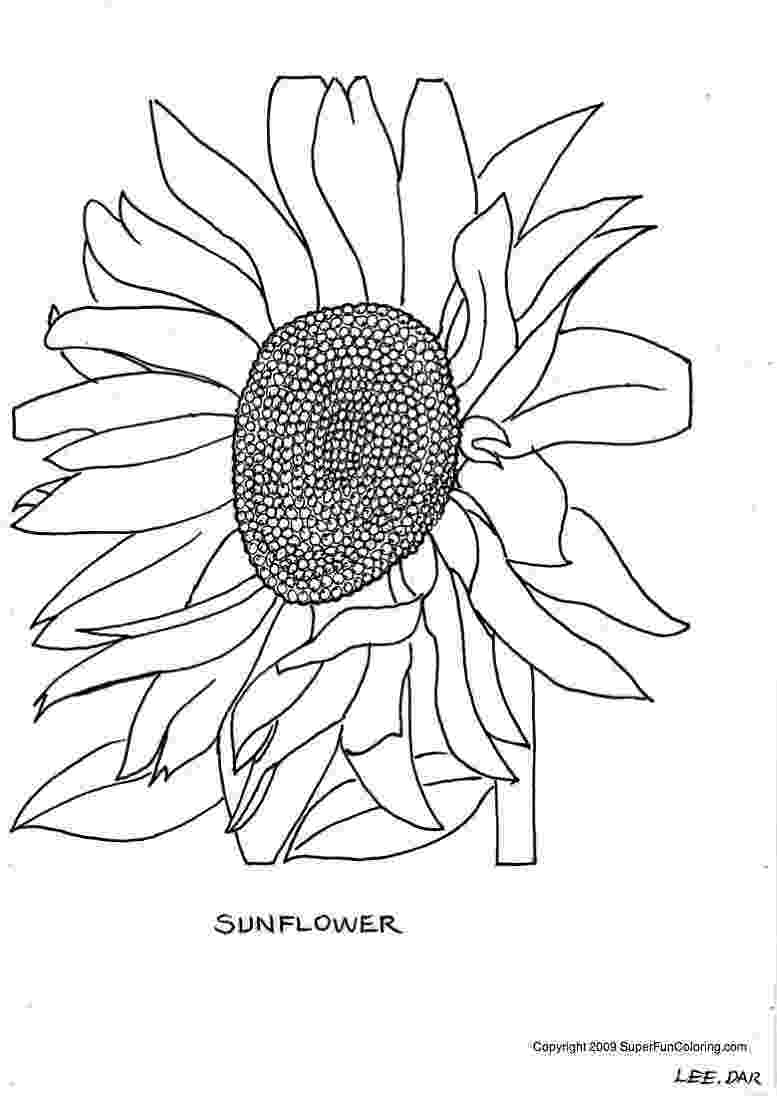 printable sunflower pictures to color printable sunflower coloring pages for kids cool2bkids pictures to printable color sunflower