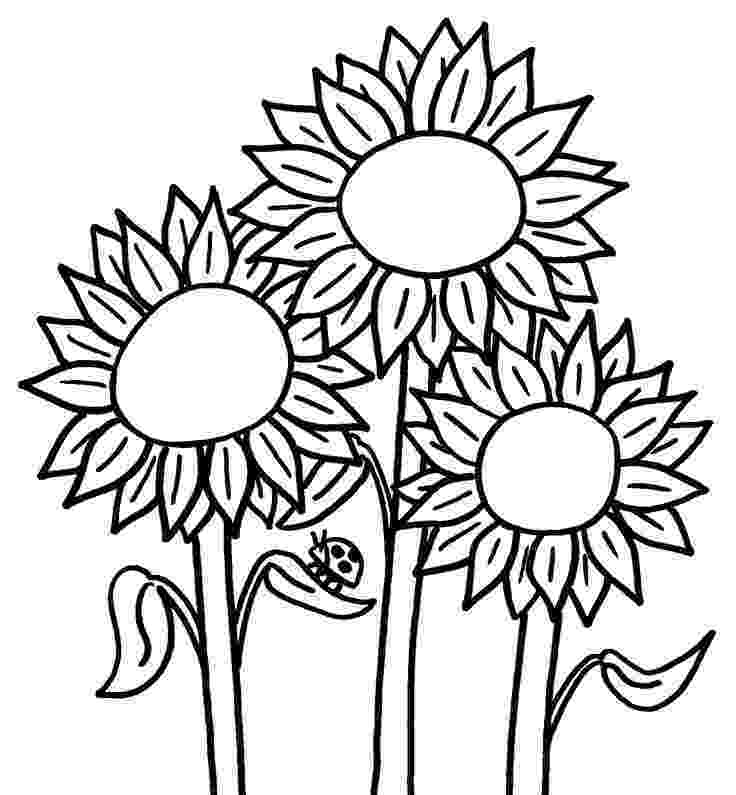 printable sunflower pictures to color sunflower coloring page getcoloringpagescom color pictures printable sunflower to