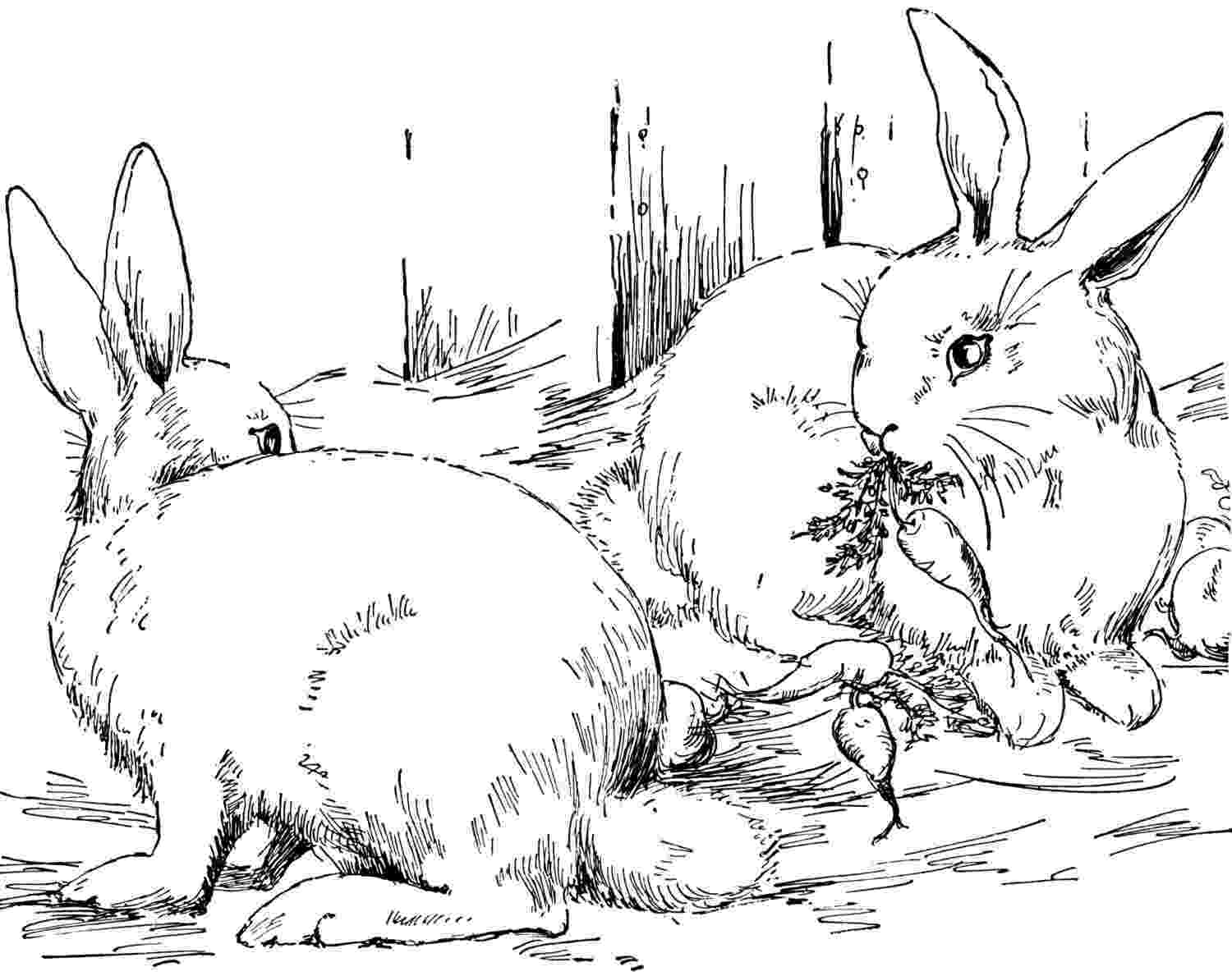 rabbit coloring pictures free rabbit coloring pages coloring rabbit pictures