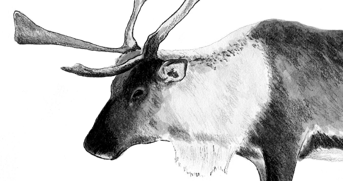 raindeer sketch how to draw a christmas deer reindeer step by step raindeer sketch
